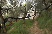 nasz domek w gaju oliwnym
